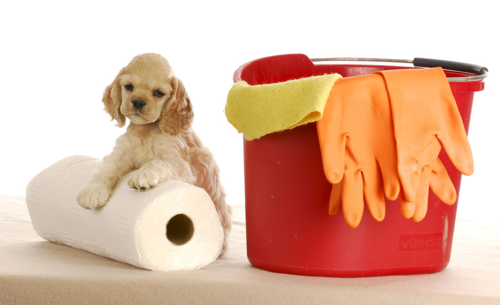 bigstock-Cleaning-Up-After-Puppy-12424886-1024x625