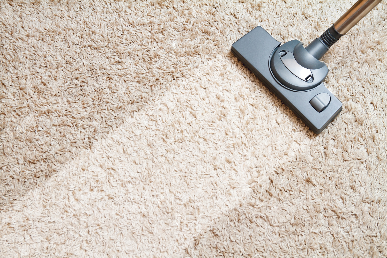 carpet cleaning toms river nj