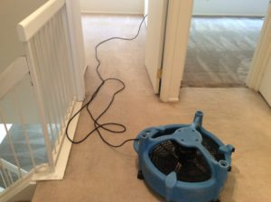 carpet cleaners toms river nj