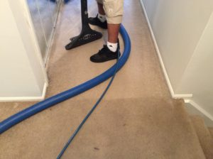 carpet washing nj
