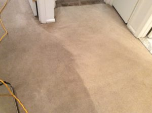 carpet cleaners ocean county